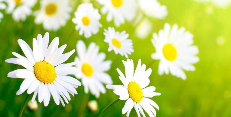 Offerta primavera Calasettana
